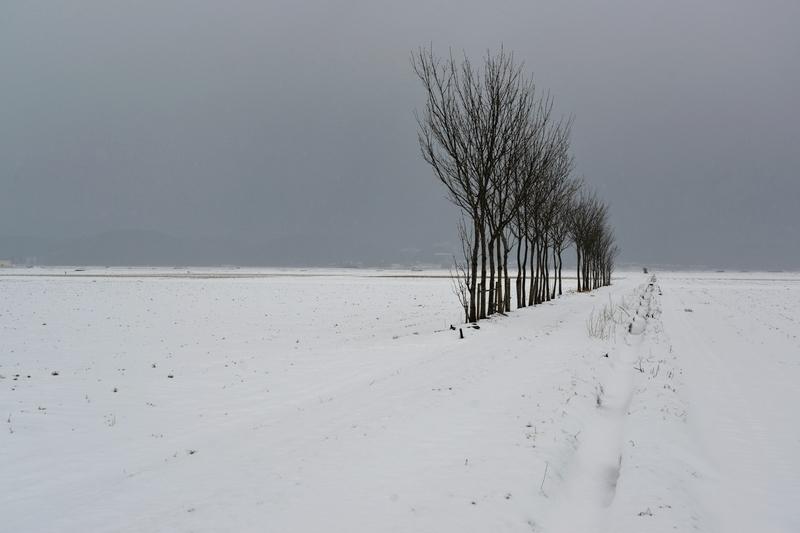 はさ木 雪原-2