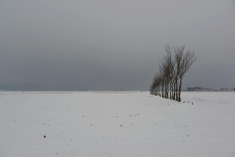 はさ木 雪原-3