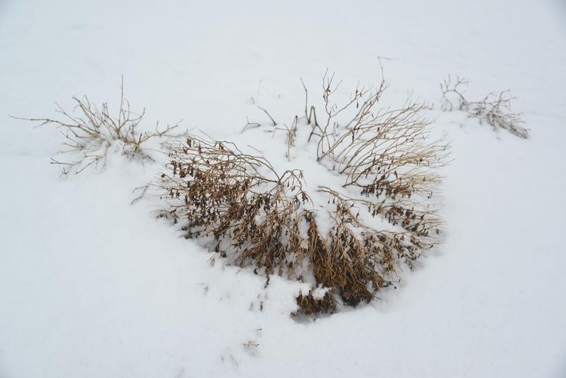 雪に包まれて-1