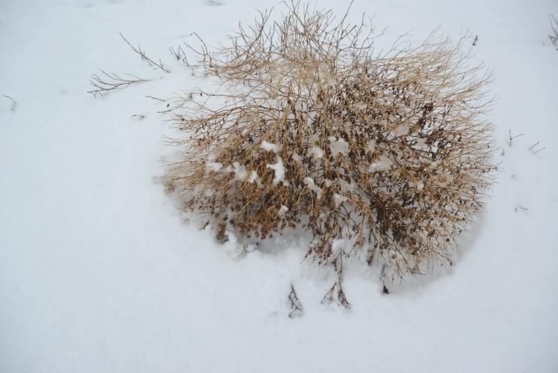 雪に包まれて-3