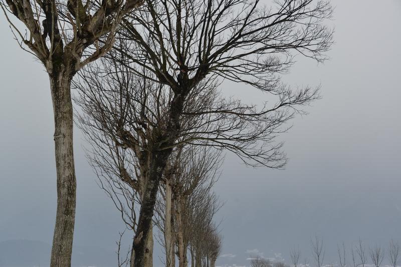 冬空にはさ木-1