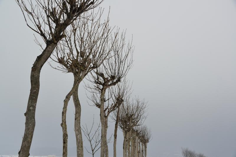 冬空にはさ木-3