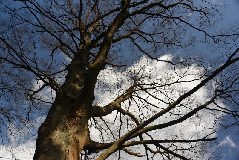 冬の木-1