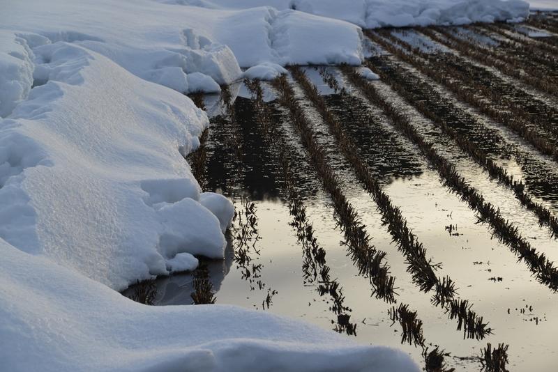 雪解け-4