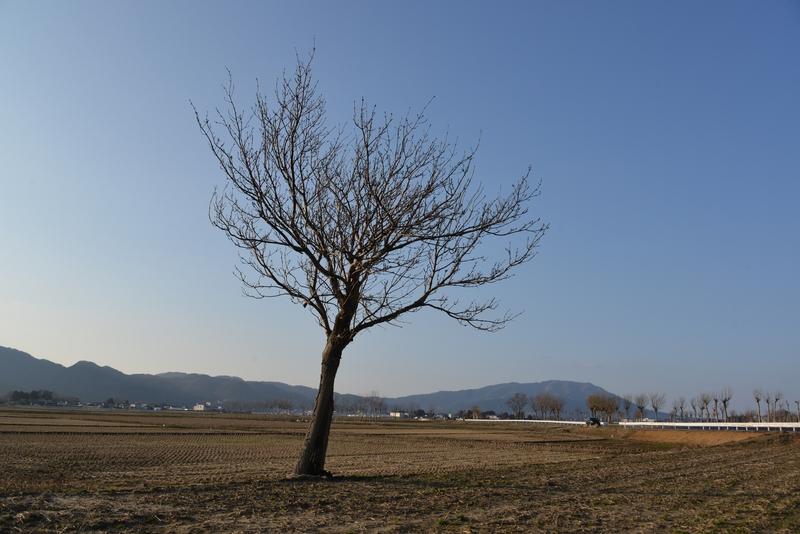 一本の木-1