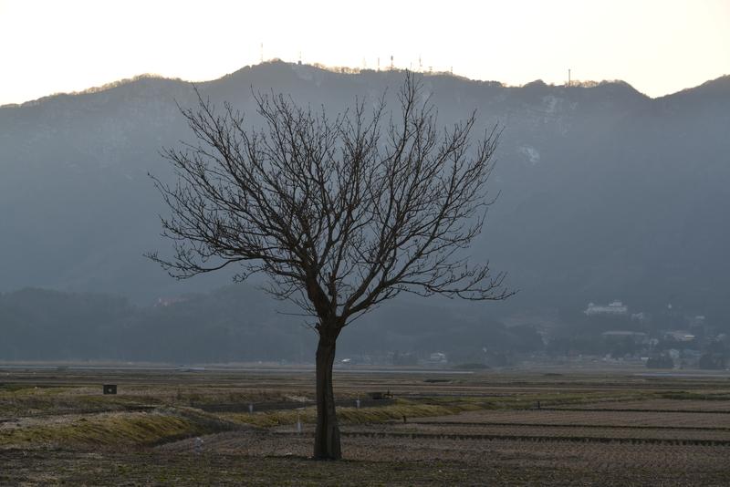 一本の木-2