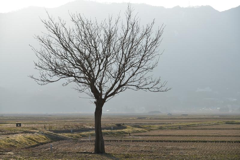 一本の木-3