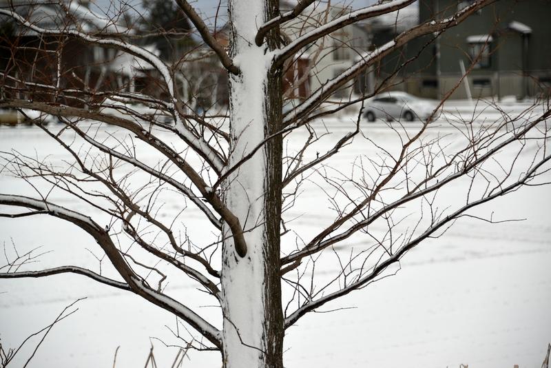 春から冬に-1