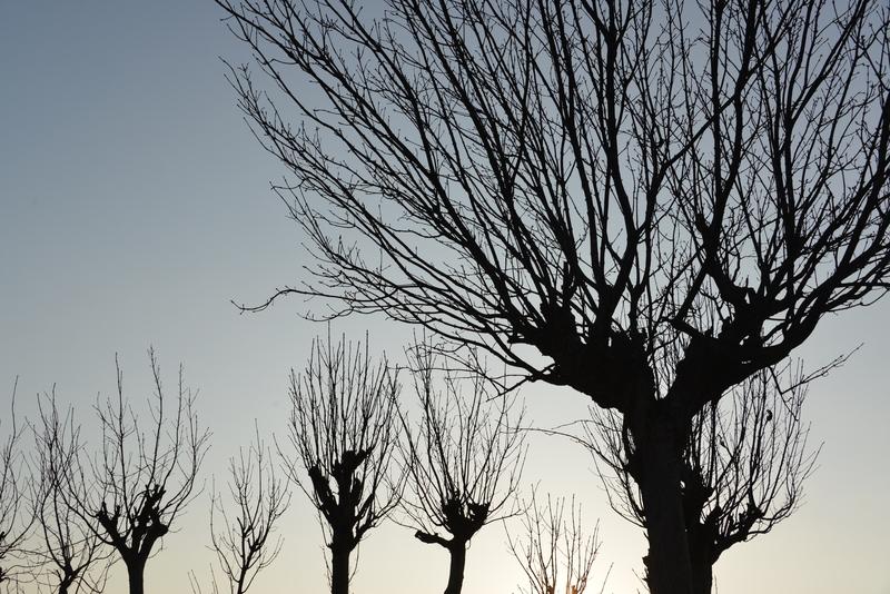 はき木 シルエット-2
