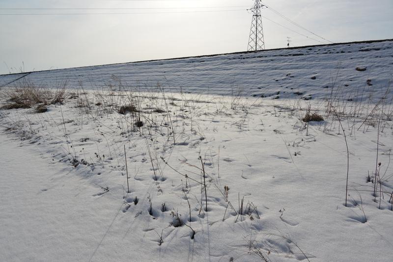 土手 雪-1