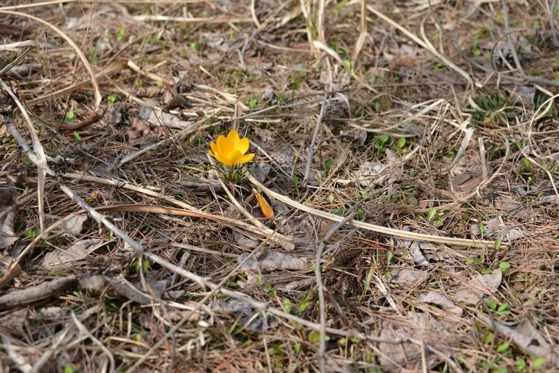 小さい春-1