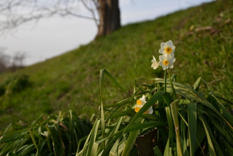 小さい春-4