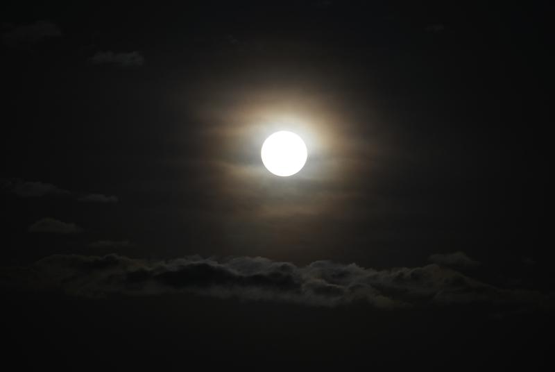 桜と月-4