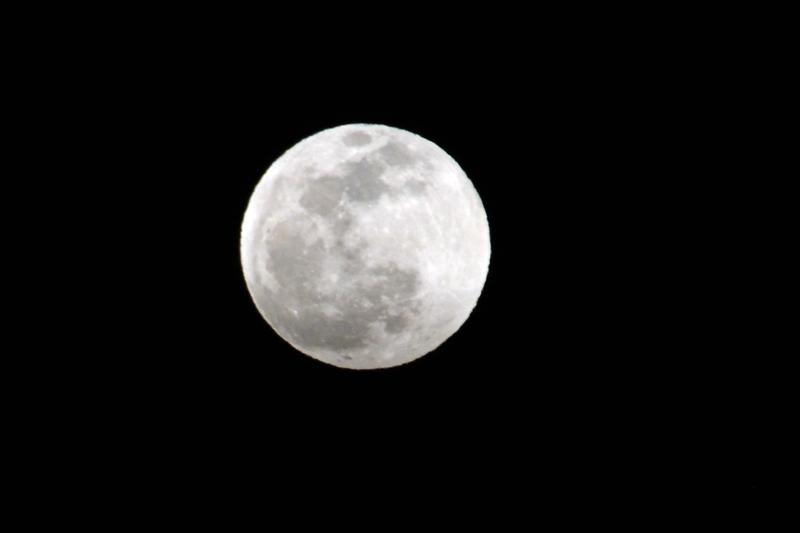 桜と月-5