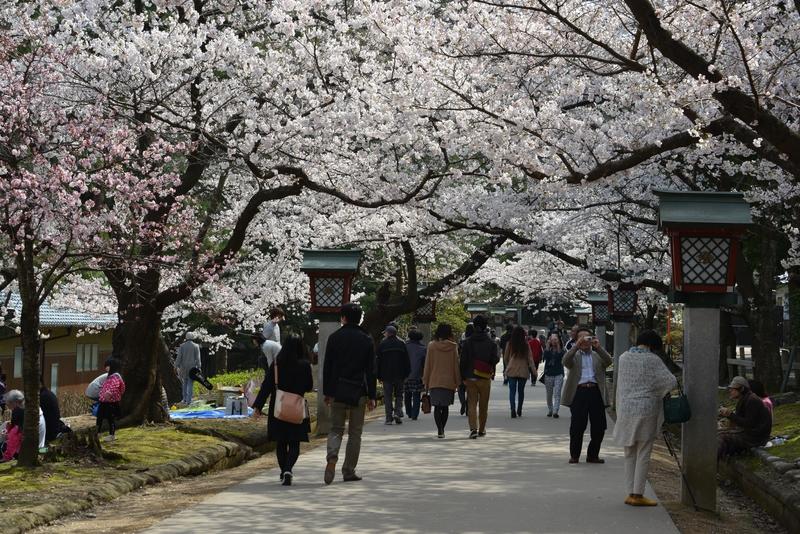 桜 賑わい-1