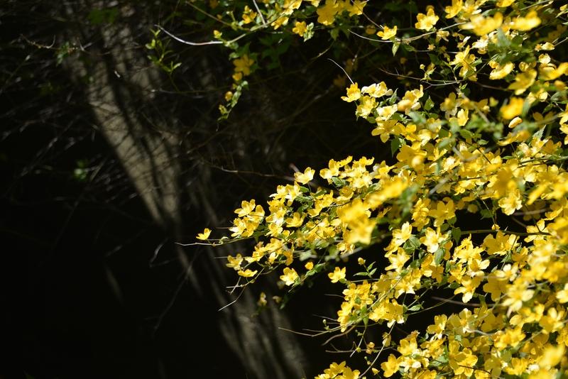 花の季節-3