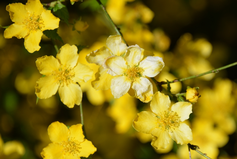花の季節-5