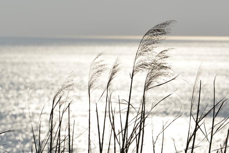 休日の浜辺-4