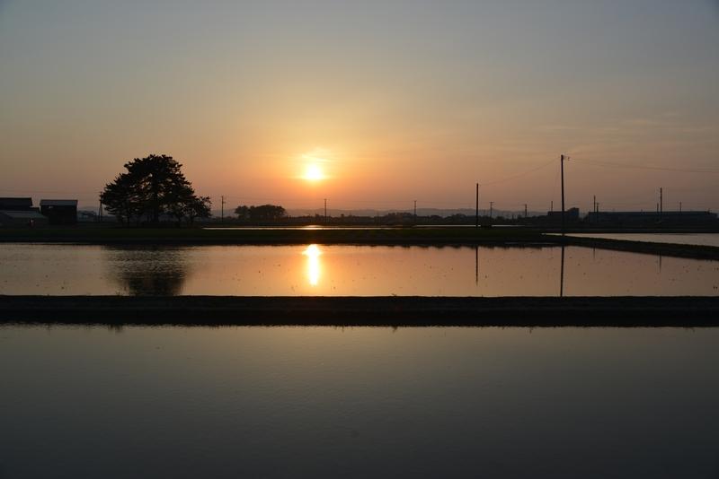 夕陽 レンコン畑-1