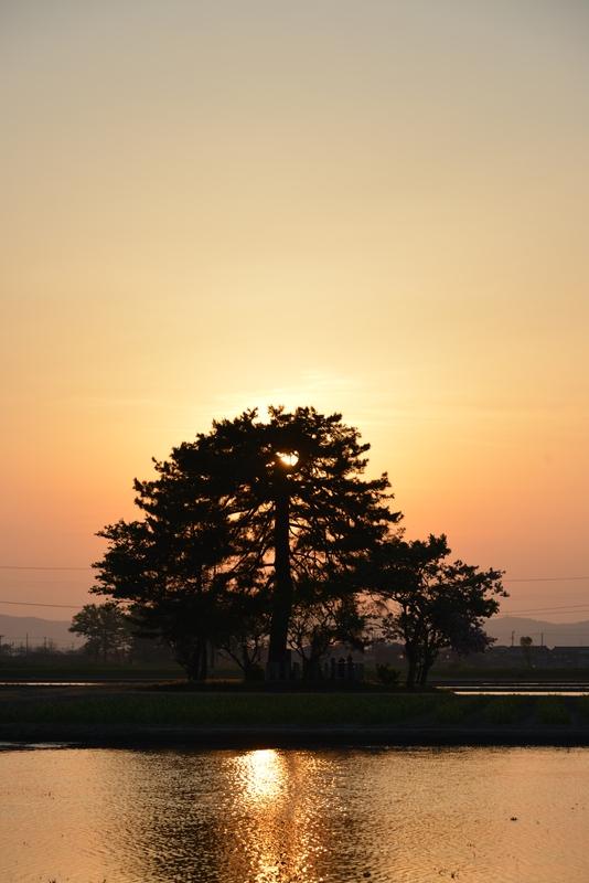 夕陽 レンコン畑-3