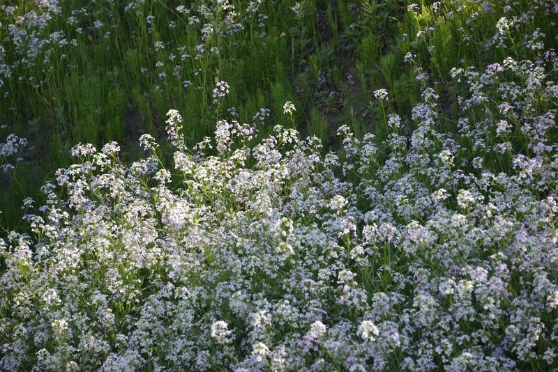 花の季節Ⅱ-2