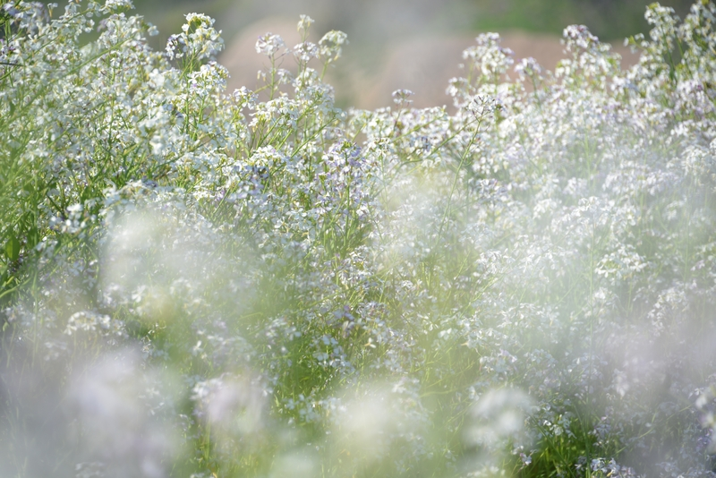 花の季節Ⅱ-3