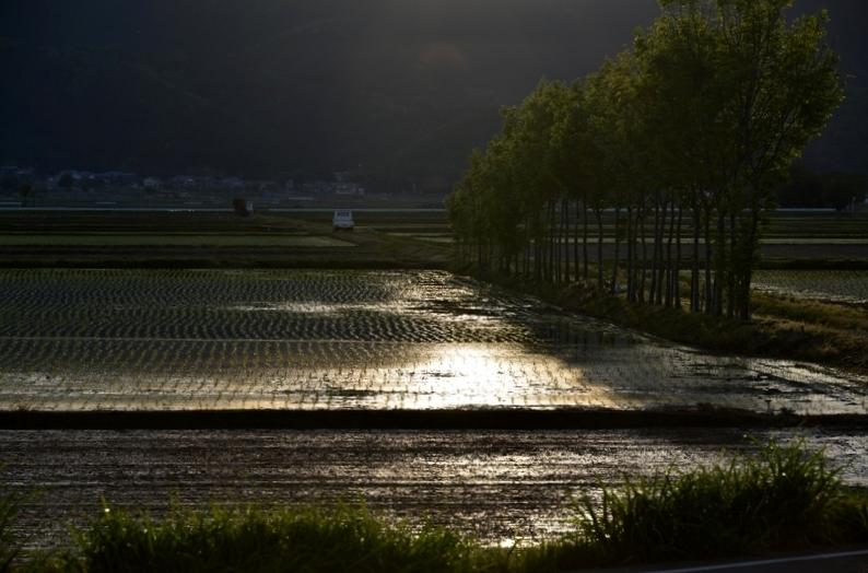 田植えの候 光の先に-3