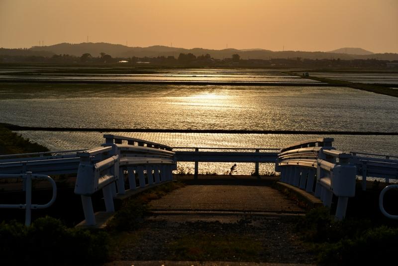 水田の夕陽-1