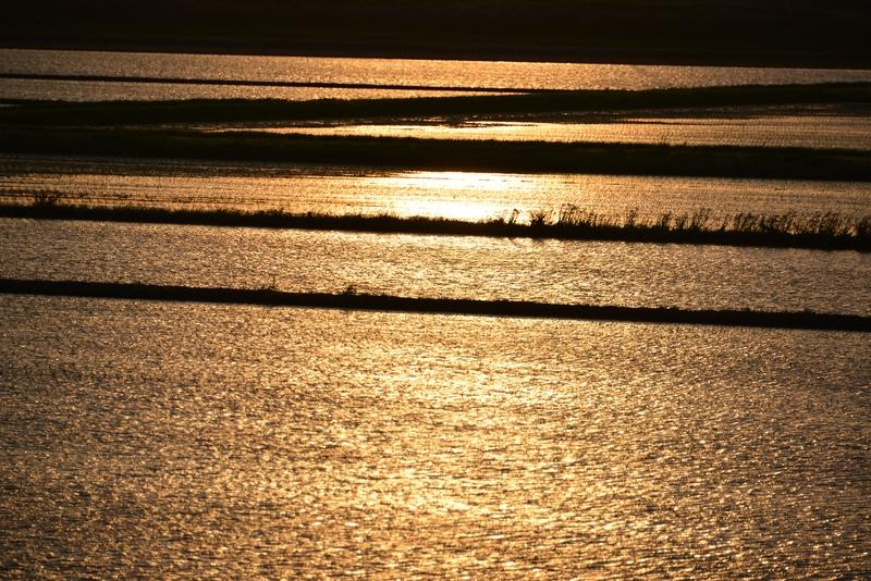 水田の夕陽-3