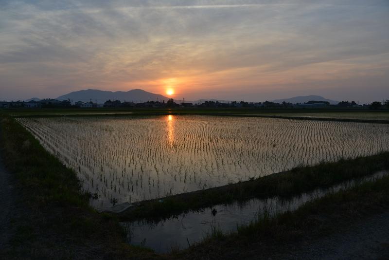 今日の夕陽 水田-1