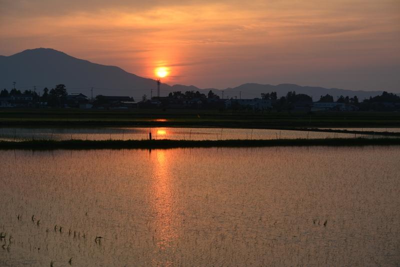 今日の夕陽 水田-2