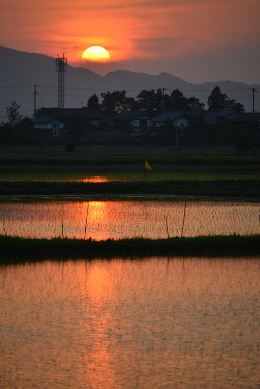 今日の夕陽 水田-4