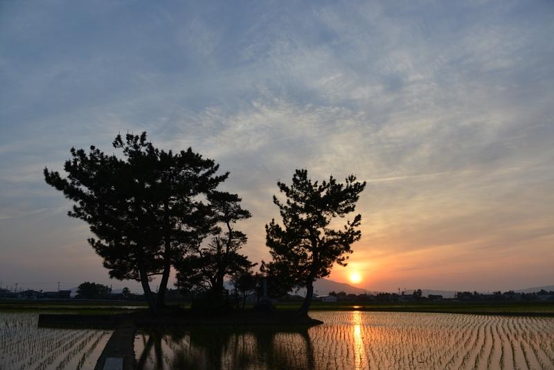 今日の夕陽 水田-5