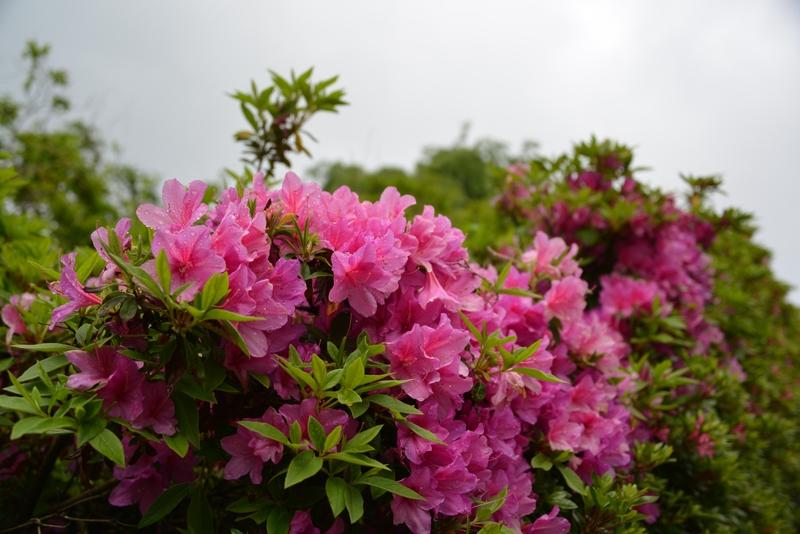 春の花たち-5