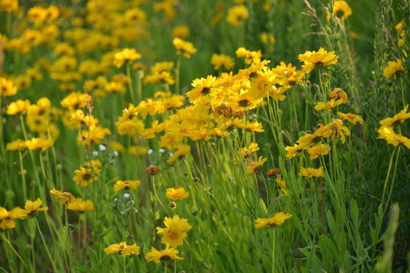 黄色い花たち-1