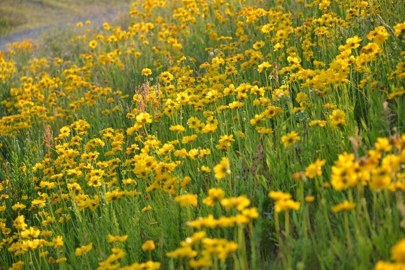 黄色い花たち-2