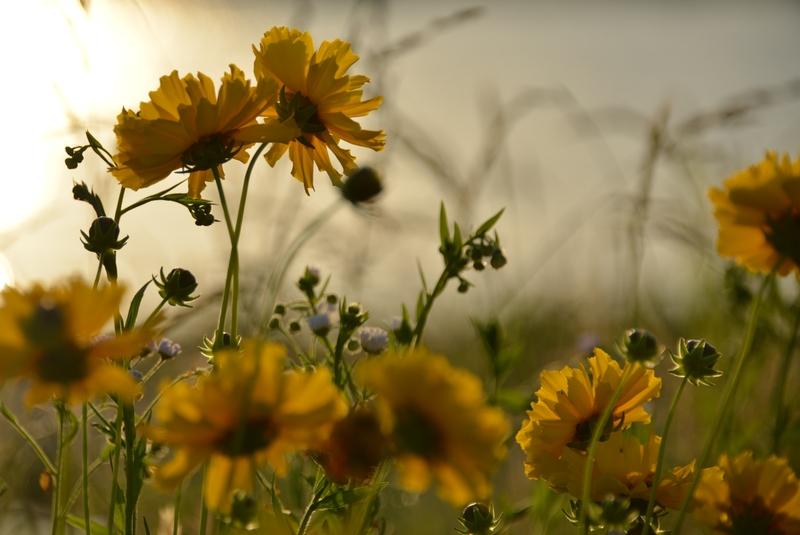 黄色い花たち-5