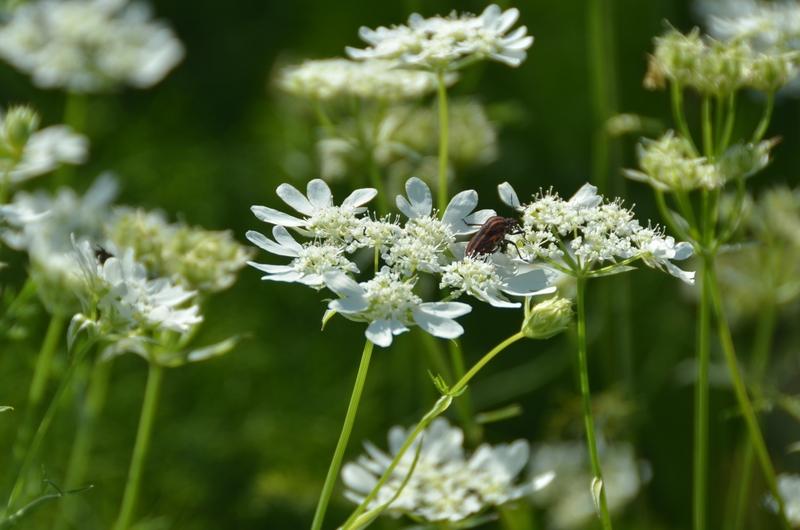 白い花々-3