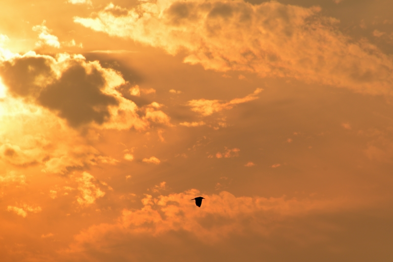 夕焼け 雲-3
