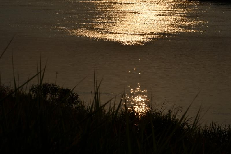 光る川-2