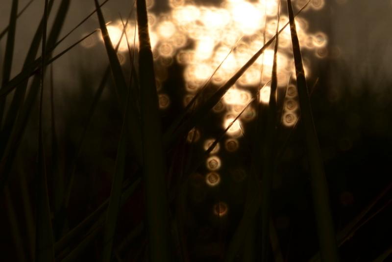 光る川-4