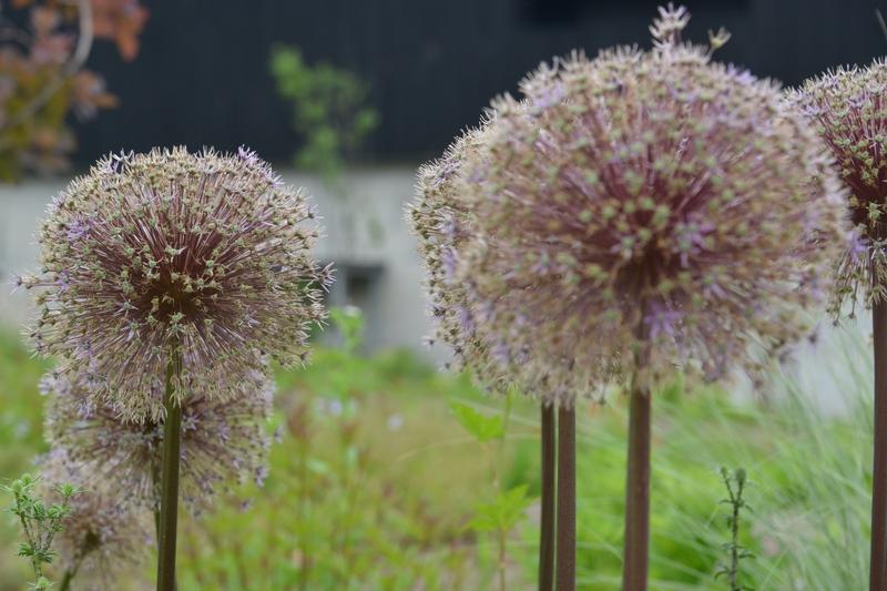 魚沼の郷 花-3