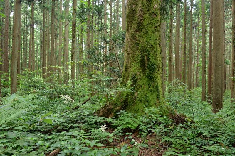 林の中へ-1