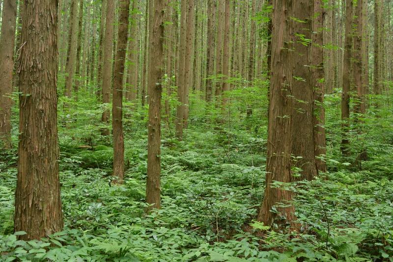 林の中へ-2