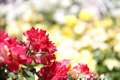 photo-lesson3-d.jpg