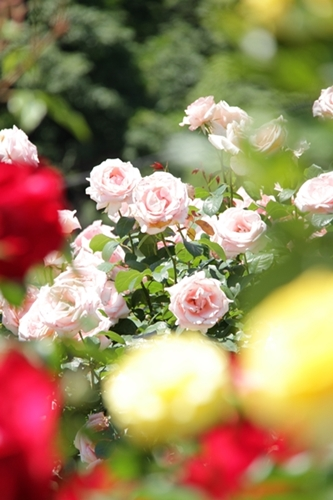 photo-lesson3-f.jpg