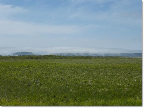 霧多布湿原2015年6月14日5