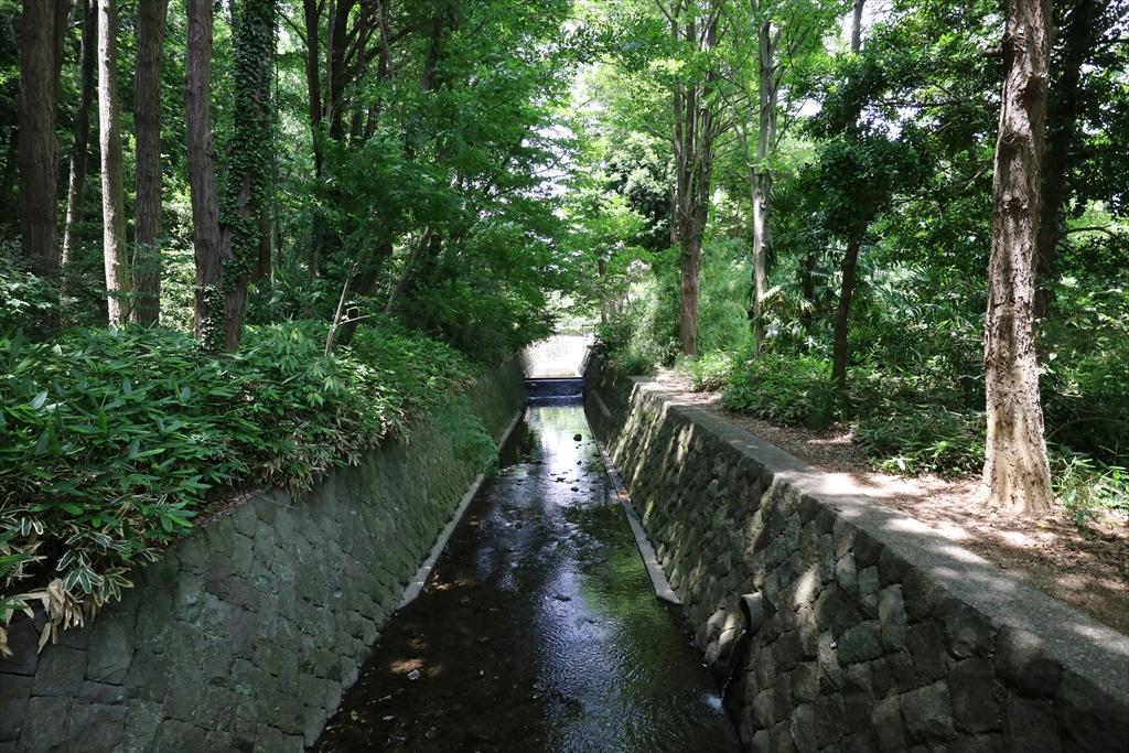 谷戸川を渡る_1