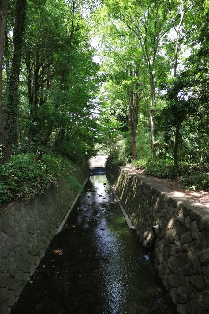 谷戸川を渡る_2