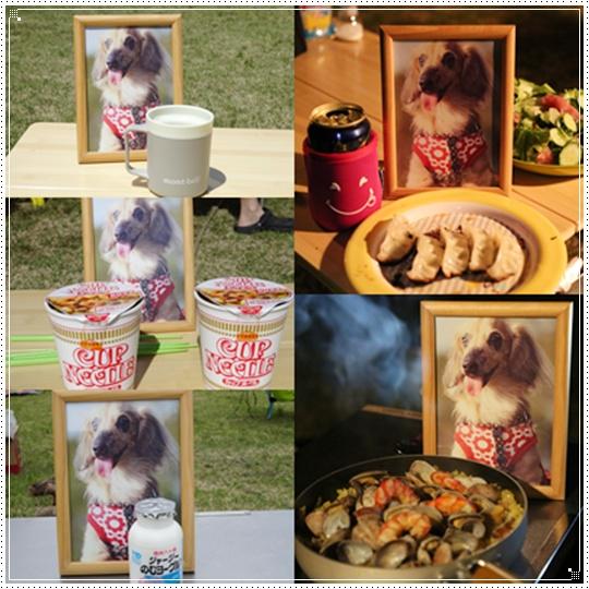 cats_20150609155448572.jpg